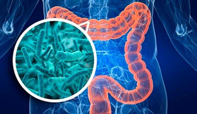 მეტფორმინის ანტიდიაბეტური ეფექტი კავშირშია ნაწლავის მიკრობიომის ცვლილებებთან