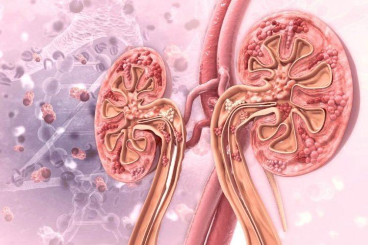 ახალი მარკერები, რომლებიც იცავენ თირკმელს დიაბეტური დაზიანებისგან – მკურნალობის პერსპექტივები