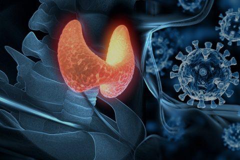 COVID-19-ს ფარისებრი ჯირკვლის ატიპური ანთების გამოწვევა შეუძლია